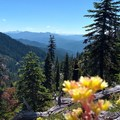 Great Views of the Cascades!!!!- Opal Creek Wilderness