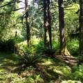 Trail View!- Cascade Head Hike