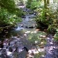 Necarney Creek!!!- Neahkahnie Mountain Hike