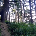 Crazy Hand Tree!!!!- Neahkahnie Mountain Hike