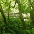 Bridge!- Little Hamilton Mountain Hike