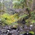Trail Views- Abiqua Falls