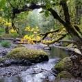 Enchanted- Abiqua Falls