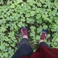 Clovers- Butte Creek Falls Hike