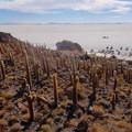 Isla Incahuasi (Uyuni, Bolivia)- Solar de Uyuni: Incahuasi Island + Train Cemetery