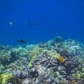 Great snorkel spot- Kealakekua Bay State Historical Park