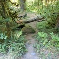 Path to lower site- North Fork Campground