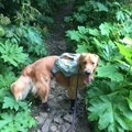 dog booties came in handy for protecting paws from all the chicken wire- Saddle Mountain