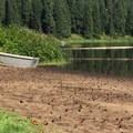 Boat ramp at Clear Lake Resort. Covered in butterflies. They'll move. - Clear Lake