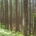 Gorge Trail #400 Hike