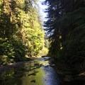 Butte Creek Falls Hike