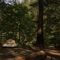 Camp site 7- Shady Cove + Cedar Creek Campground