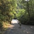 Bridge to gold mine pool- Shady Cove + Cedar Creek Campground