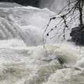 Standing at the brink of Lower Lewis Falls at a flow of 5070 CFS (Median Flow for this date over 33 yrs is 1350 CFS) Thunderous!- Lewis River Falls