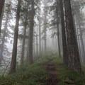 Heading up Starvation Creek- Mount Defiance Hike