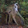 Stump House- Guillemot Cove Nature Preserve