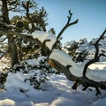 Trees in the Devil's Garden- Craters of the Moon National Monument and Preserve