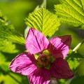 Spring flowers in April.- Bridal Veil Falls, Oregon