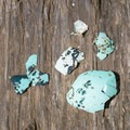 Murre eggshells- Cape Lookout Hiking Trail