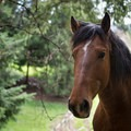 Friendly horse along the trail- Powell Butte Nature Park