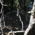 Saw quite a few of these domed spider webs. Did they know they were on Dome Trail?- Castle Crags Dome Hike