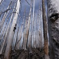 Silvery bark of burned trees that have shed their bark- Vista Ridge Trail Hike