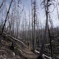 Making our way through the Dollar Lake fire area- Vista Ridge Trail Hike