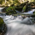 The creek above the falls.- Panther Creek Falls