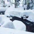 Pocket Creek