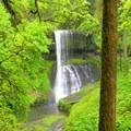 Silver Falls, Trail of 10 Falls