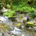 Keeping hydrated- Siouxon Creek Hike