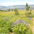 Meadow near parking lot- Tom McCall Point Hike