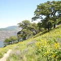 Tom McCall Point Hike