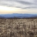 Between Round Bald and Jane Bald. - Carvers Gap to Grassy Ridge Bald