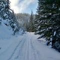 A view up the trail... Nice snow underfoot!- Pocket Creek