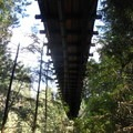 Under the bridge- Capilano Suspension Bridge Park