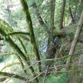 Top of a small waterfall- Capilano Suspension Bridge Park