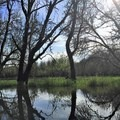 More flooded forest- Scappoose Bay