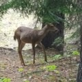 Everytime we come, a friend shows up for breakfast- Barlow Crossing Campground + Campsites