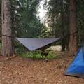 Deer friend- Barlow Crossing Campground + Campsites
