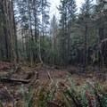 Landslide- Tillamook Head Hike