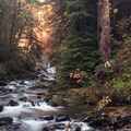 I hit the trail at 7am here, and was able to catch the golden rays just breaking through the trees. - Sweet Creek Hike