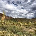 Beautiful Saguaros at the beginning of the trail- Peralta Canyon Trail
