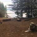 Spacious & secluded campsite.- Timothy Lake, Meditation Point Campsites