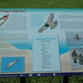 The park provides a list of raptors for visitors to be on the lookout for- Lighthouse Point Park