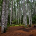 Well maintained trails weave through the forest.- Lewis River Falls