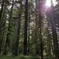 Campsite in the trees- Lost Creek Campground