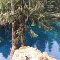 McKenzie River Trail: Trail Bridge to Tamolitch Pool