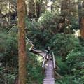 Rainforest path- Wya Point Resort Campground
