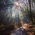 Spirit of the Forest- Wild Cherry Trail Loop